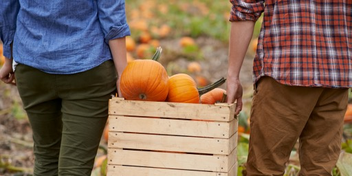 Where to go Pumpkin Picking this Halloween on Long Island