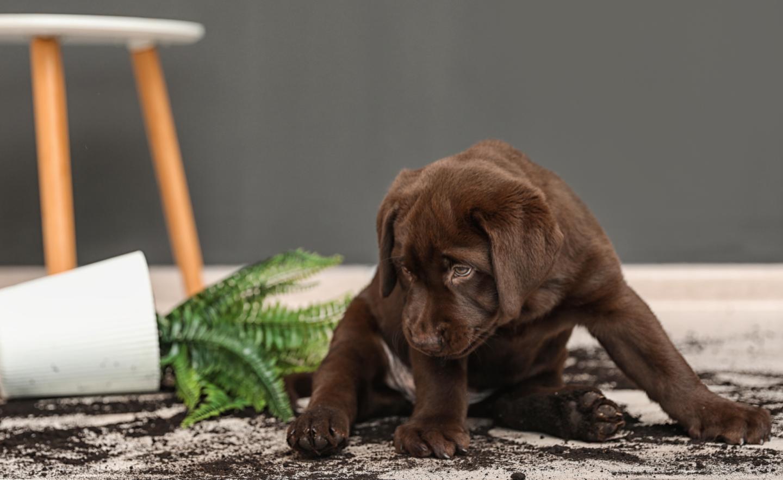 10 Best Pet-Friendly Plants